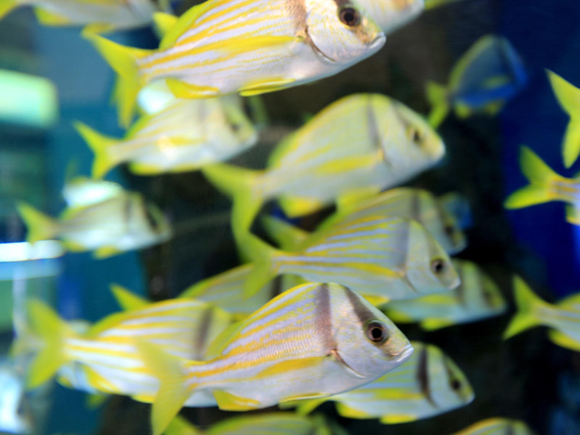 Children's Aquarium at Fair Park, The in Beyond Dallas