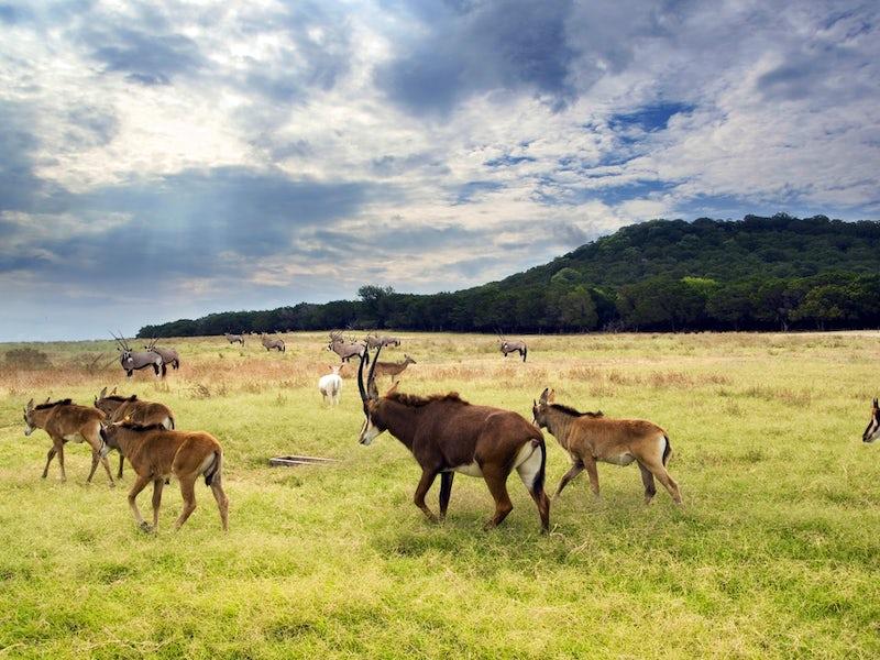 Fossil Rim Wildlife Center in Beyond Dallas