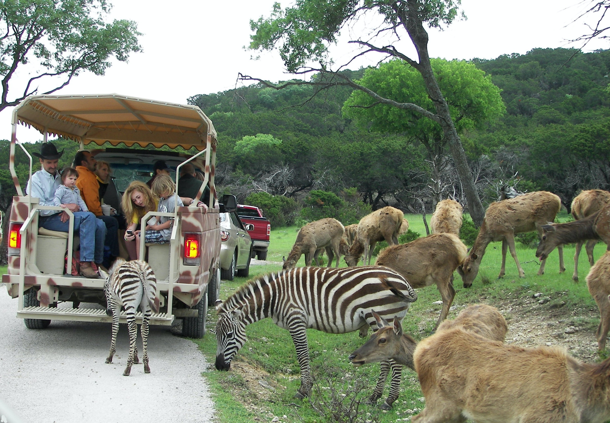 Fossil Rim Wildlife Center in Beyond Dallas